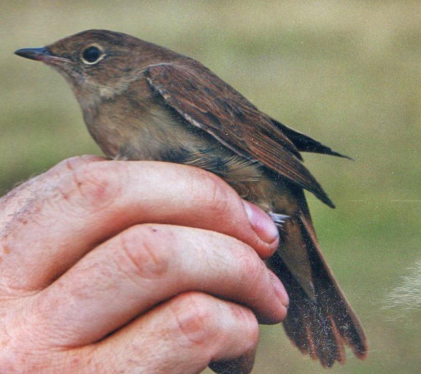 206  Nightingale